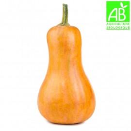 Courge butternut bio