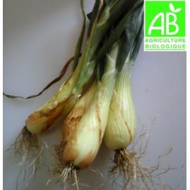 Oignons de Trébons Bio (botte de 4)