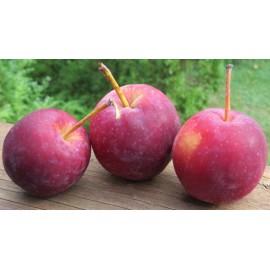 Pomme Querina (1 kg)