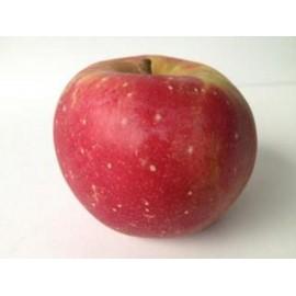Pomme Florina (1 kg)