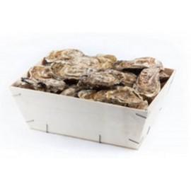 Huîtres du Cap-Ferret n°3 (4 douzaine)