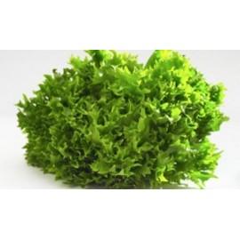 Salade scarole Bio