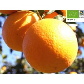 Oranges Bio (1 kg)