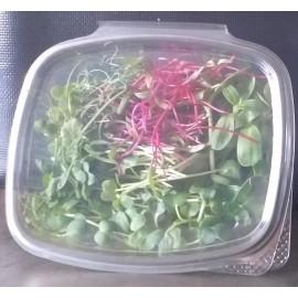 Micro-Pousses de Légumes et Céréales (30g)