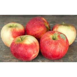 Pommes Cybèle (1 kg)